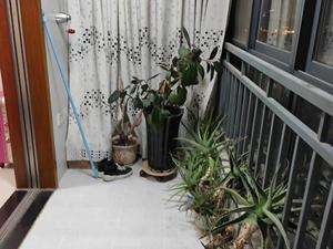 春晓馨苑 2室2厅1卫